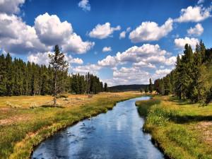 Río fluyendo por el campo