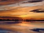 Ave reflejada en el lago
