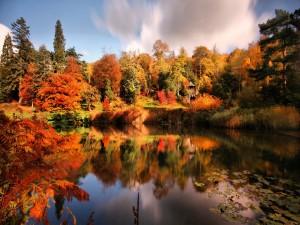 Árboles otoñales a orillas de un lago