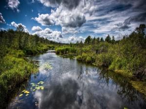 Vegetación a orillas del río