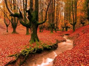 Riachuelo fluyendo por un hermoso bosque