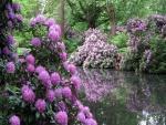 Flores color lila junto a un estanque