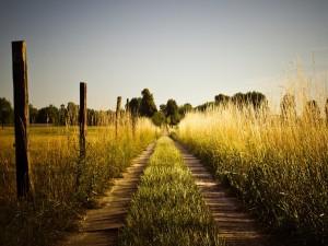 Camino junto a una valla