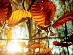 Hojas otoñales iluminadas por el sol