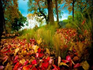 Hojas otoñales caídas sobre la hierba