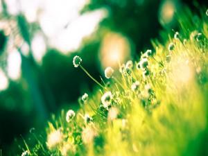 Florecillas iluminadas por el sol