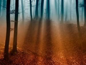 Rayos de sol iluminando el suelo del bosque
