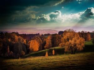 Árboles otoñales en el campo