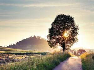 Árbol junto al camino