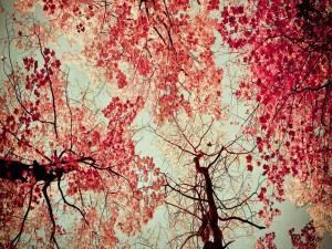 Árboles cubiertos de hojas