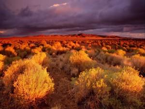 Sol iluminando las plantas del desierto
