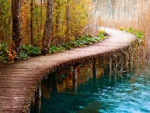 Pasarela de madera sobre el río