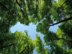 Grandes árboles verdes