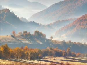 Neblina en el campo