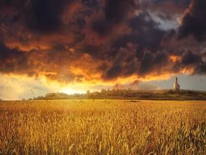 Nubes sobre el campo de trigo