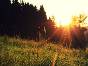 Sol iluminando la hierba