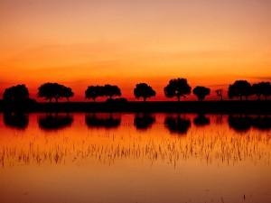 Árboles reflejados en el agua al atardecer