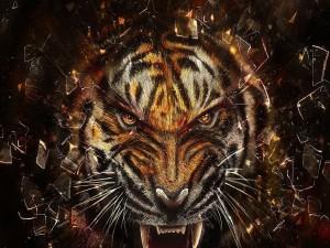 Tigre enojado entre unos fragmentos de vidrio
