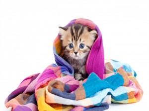Pequeño gato envuelto en un chal de colores