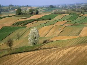 Árboles en el campo de cultivo