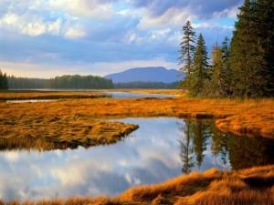 Agua entre la hierba color ocre