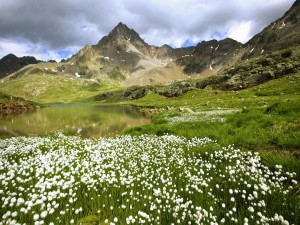 Flores blancas junto al lago