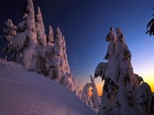 Paisaje nevado visto al amanecer