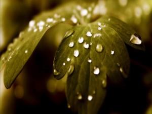 Pequeñas gotas de agua sobre unas hojas verdes