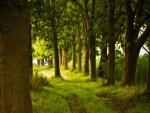 Árboles verdes junto al camino