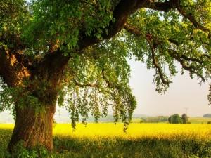 Hermoso árbol en el campo