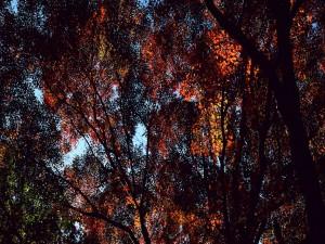 Árboles cubriendo el cielo
