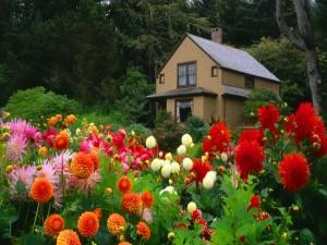 Hermosas flores en el jardín de una pequeña casa