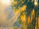 Árbol iluminado por el sol