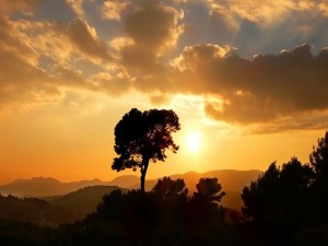 Sol brillando en el cielo al amanecer
