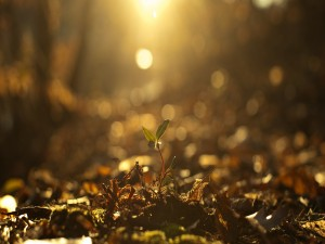 Brote iluminado por el sol
