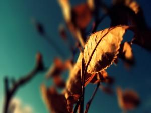 Hojas secas en las ramas
