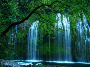 Cascadas tras las ramas de los árboles