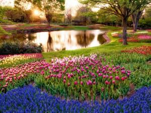Estanque en un jardín de tulipanes y jacintos