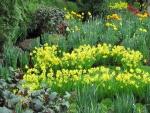Bello jardín con diversas flores