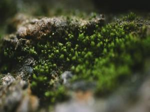 Pequeñas plantas creciendo en una roca