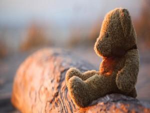 Osito de peluche sentado en un tronco