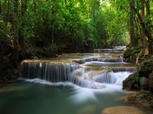 Hermoso río fluyendo en un bosque
