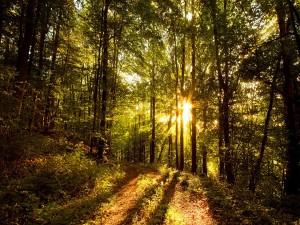 Camino del bosque iluminado por el sol