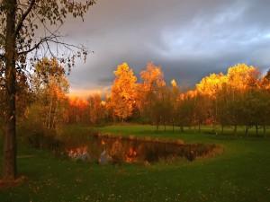 Árboles otoñales junto a un estanque