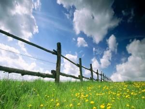 Flores amarillas junto a la valla