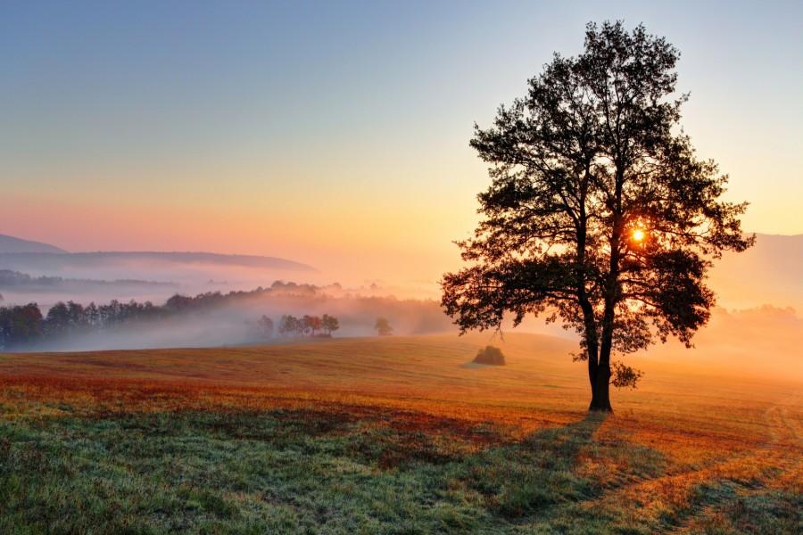 Niebla al amanecer en el campo