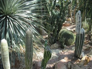 Gran variedad de cactus