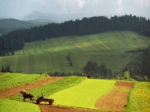 Bonito paisaje rural