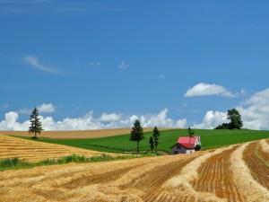 Casita entre los campos cultivados