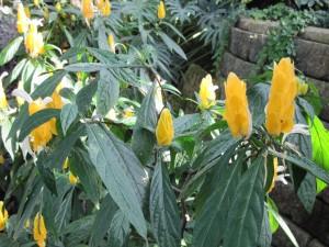 Verde jardín con flores amarillas